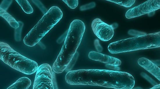 一种奇异的杆状细菌能够从深矿中放射性铀获取能量
