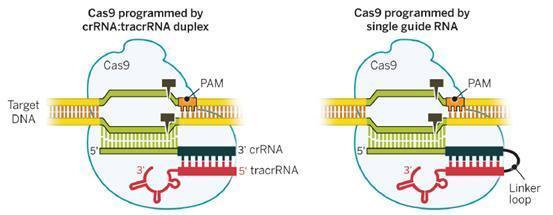 """基因编辑记录人类DNA中的""""记忆"""""""