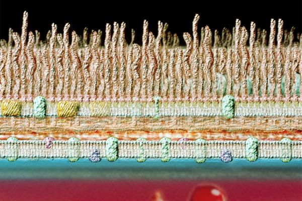 潜伏在血液里的细菌可能是无数疾病的元凶
