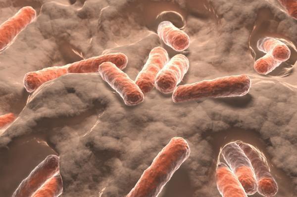 口腔细菌可以与心血管疾病有关联