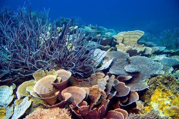 研究发现一种细菌可以保护海绵宿主免受砷中毒