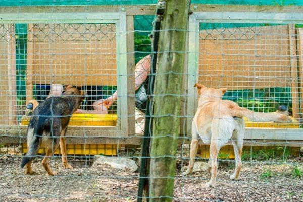 狗和狼能够识别不公平待遇 该技能遗传自其共同祖先