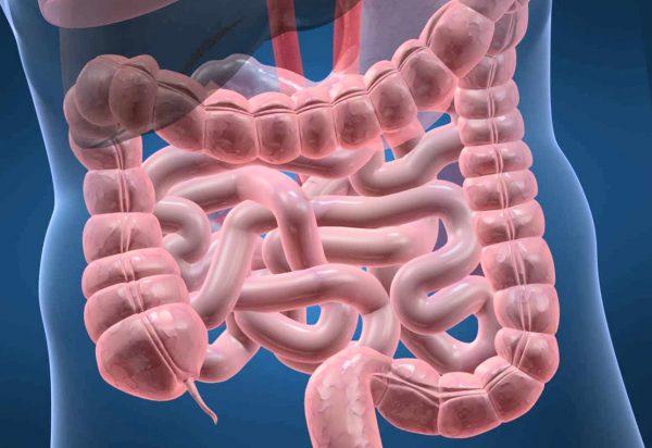 改变肠道细菌途径可以刺激脂肪组织以预防肥胖