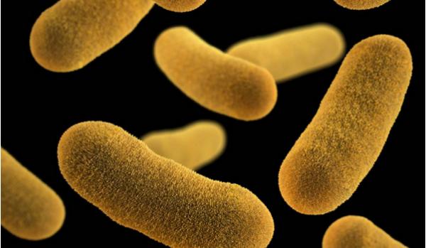 细菌太聪明 比杀死它们更有效的是减缓其生长速度