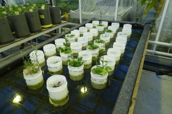 蚯蚓能够在火星土壤中繁殖