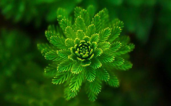 植物通过强大的修复系统修复DNA对紫外线的伤害