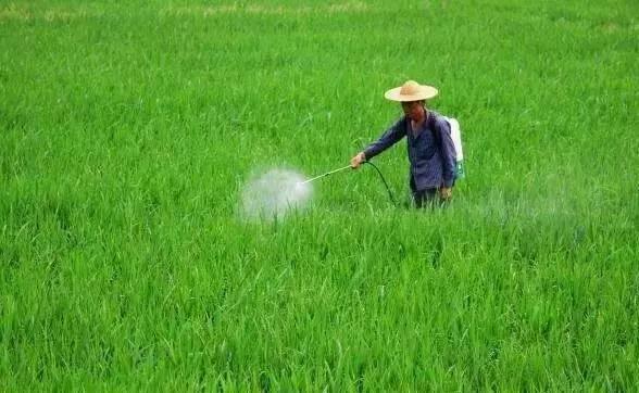 澳门大学成功研发对人无害除草剂