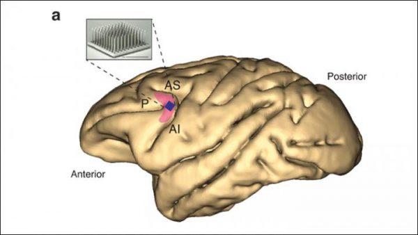 ADHD药物利他林对灵长类动物前额皮质没有影响
