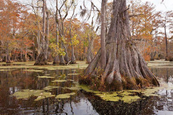 北美东部最古老的树木2624岁了