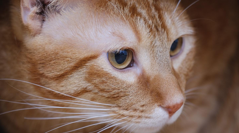 adorable-animal-cardboard-1643468.jpg